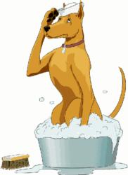 Dog taking bath.